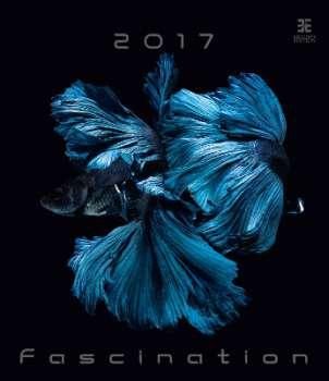 Nástěnný kalendář 2017 Fascination