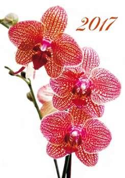 Nástěnný kalendář 2017 Orchideje - Orchids
