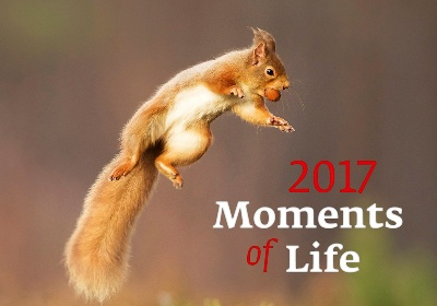 Nástěnný kalendář 2017 Moments of Life