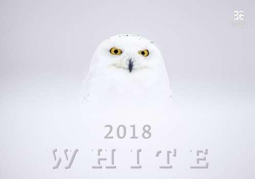 Nástěnný kalendář 2018 White